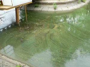 lacul din parcul Bordei 3