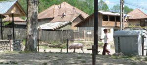 satul românesc... Bertea